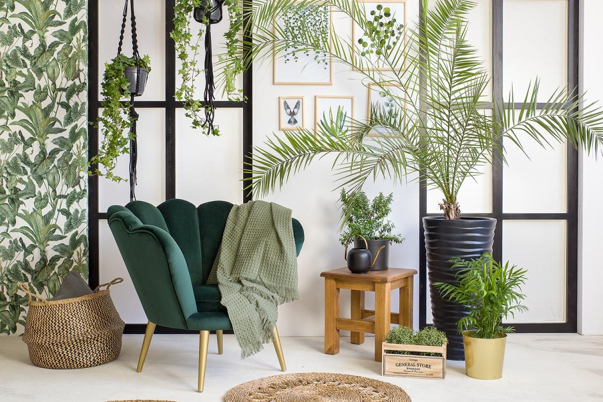 Zielony salon z roślinami
